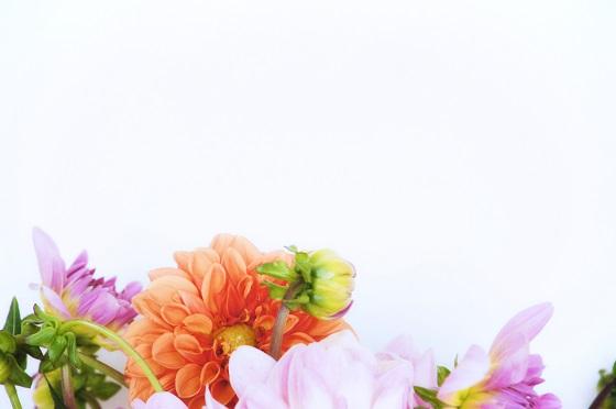 bouquet-dahlias-cliche-mignon-2